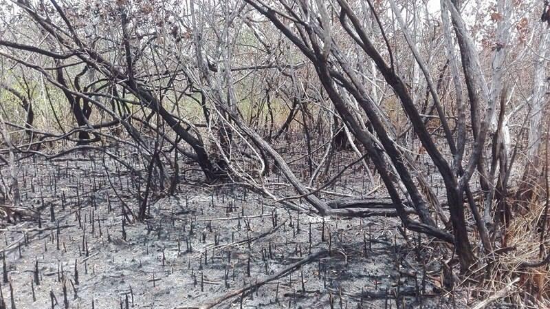 Afectadas en la entidad 2 mil 400 hectáreas por incendios forestales