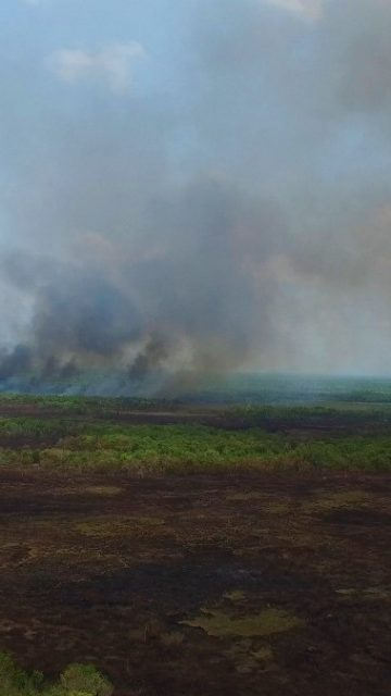Combaten Conafor y Conanp incendio en el Área Natural Protegida de Los Petenes