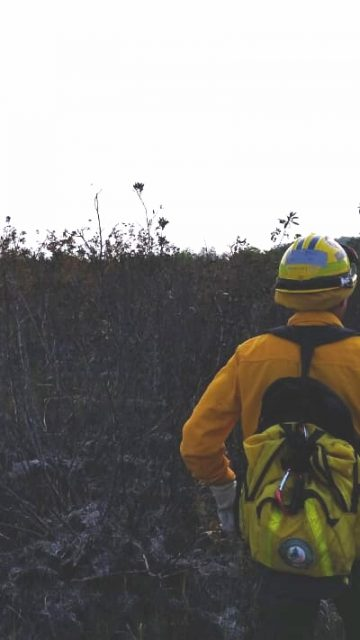 Incendio en Los Petenes devastó 500 hectáreas; tardarían 5 años en recuperar tular y pastizales